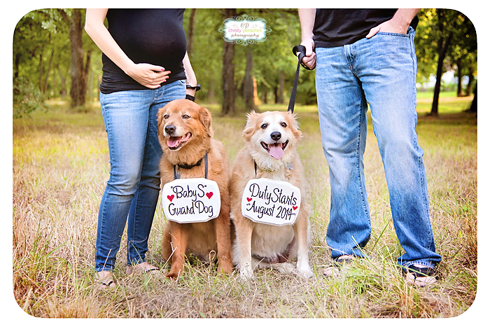 Maternity and dogs Christy Persichini Photography