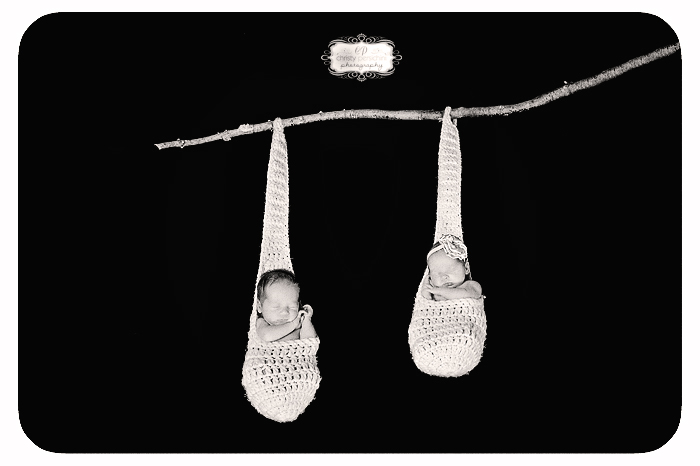 Newborn twins hanging tree photo Christy Persichini Photography